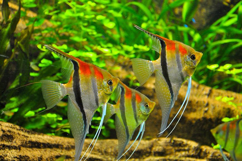 L 39 alimentation des poissons boutique d 39 animaux chico for Alimentation poisson aquarium