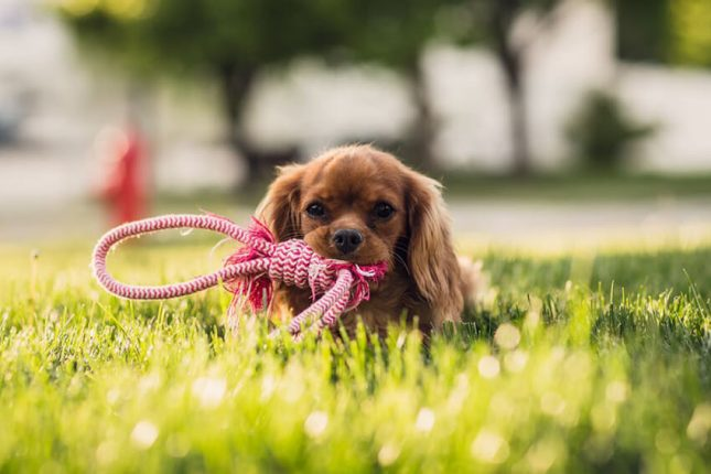 A guide to dog park etiquette