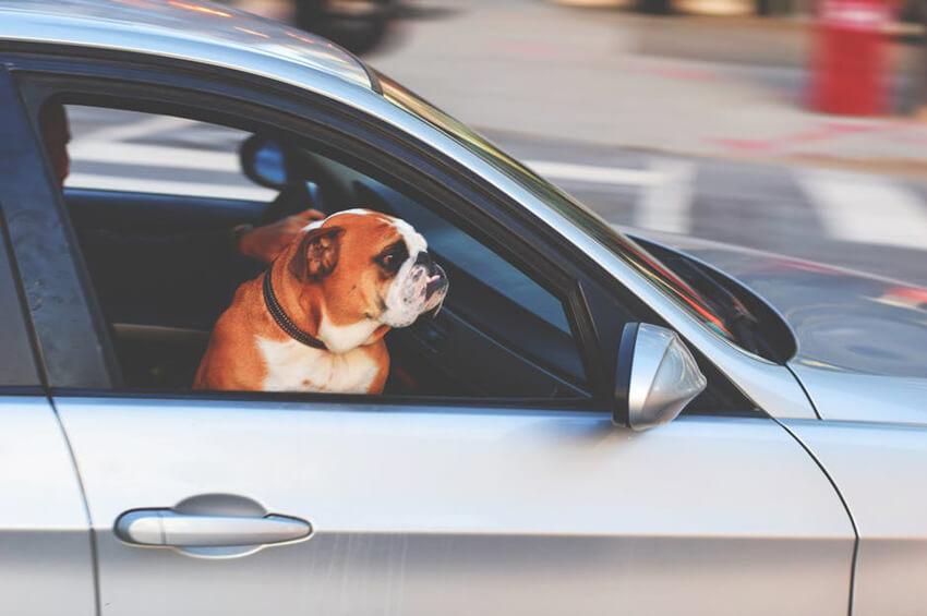 Sécurité Le Conseils Des Transport Voiture De Pour En Animaux BWQrCxedo