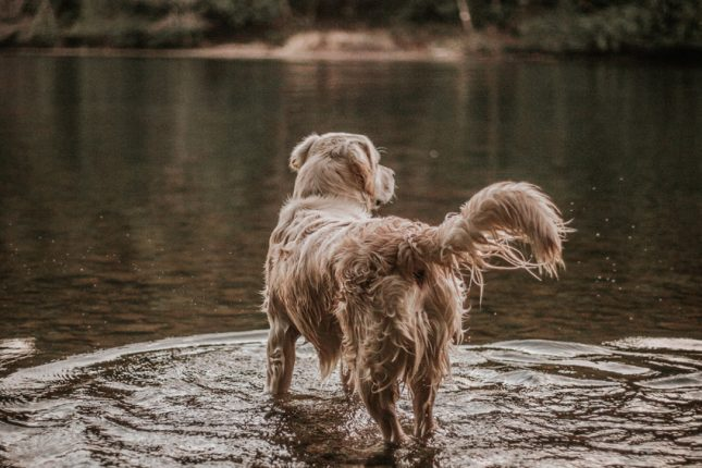 How to prevent wet dog smell