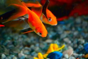 3 Tips for creating a vibrant aquarium