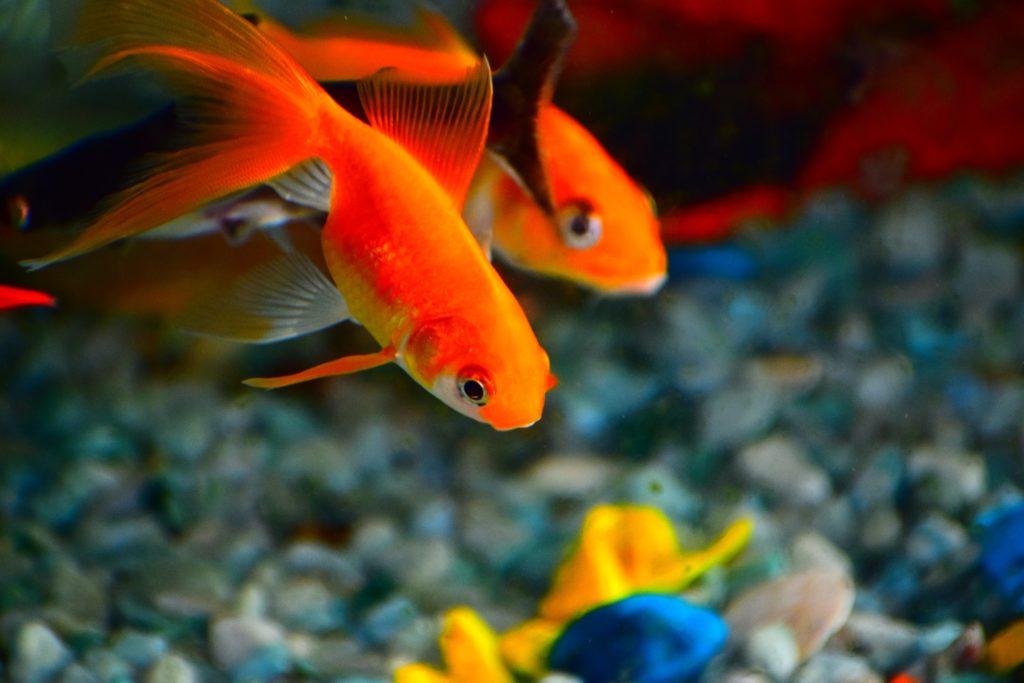 3 conseils pour avoir un magnifique aquarium et des poissons en sant boutique d 39 animaux chico. Black Bedroom Furniture Sets. Home Design Ideas
