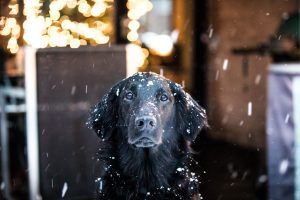 Protecting your pet during winter