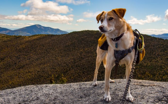 How to plan for a summer hike with your dog