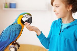 5 things you should know before adopting a parrot
