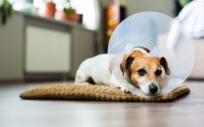 4 tips for caring for your pet after an operation