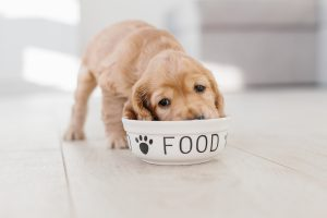Training your pet using treats: do's and don'ts