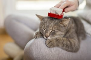 Why do you need to brush your cat?