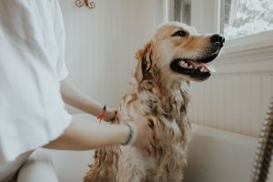 What type of shampoo should you buy for a pet with sensitive skin?